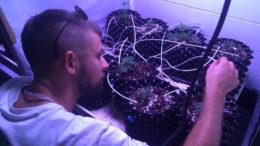 Cannabis Research Class der Berliner Humboldt Universität