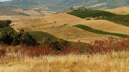 Hanf Innovation Projekt Multicanapa auf Sizilien