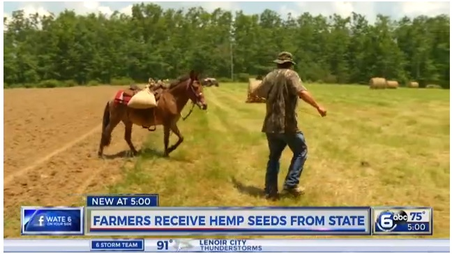 Hemp trials in Tennessee.