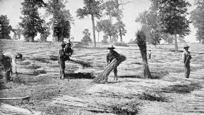 Spreading hemp in Kentucky
