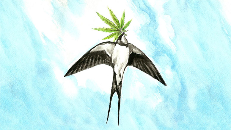 How high can Polish hemp fly?