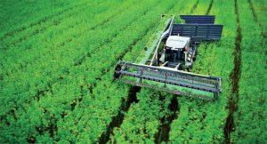 European hemp farmers 'fairly optimistic,' CanXchange index reveals