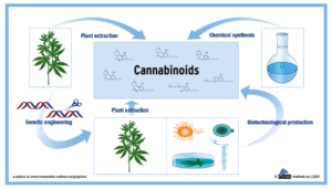 Biotech processes can drill down on cannabinoids, report suggests